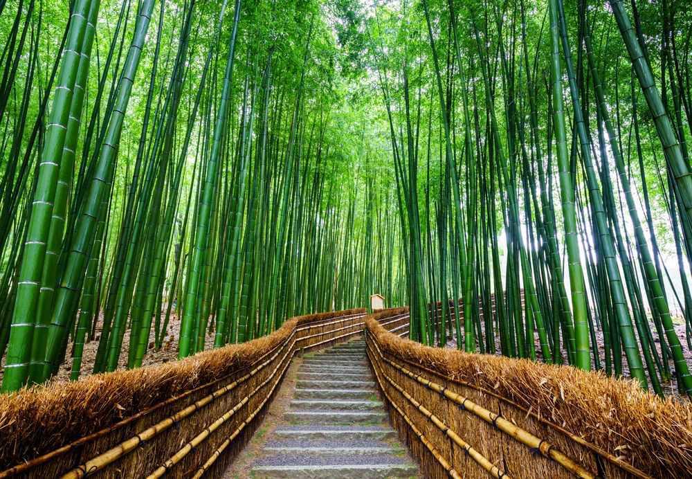 Arashiyama(FILEminimizer)