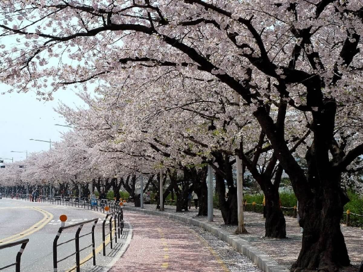 seoul-yeouido-park
