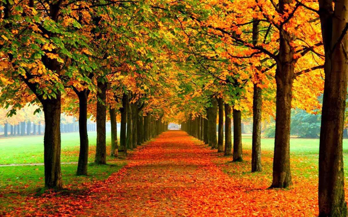 nami autumn(FILEminimizer)