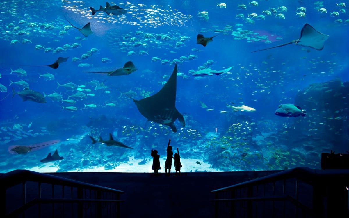 singapore-sea aquarium